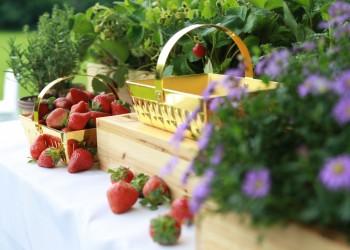 Wedgwood野草莓系列五十周年庆典